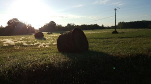 Bales of hay in rural NC countryside